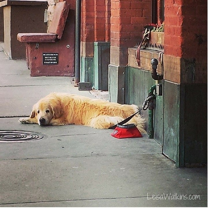 Resting Dog | Park City Main Street by Leisa Watkins